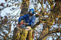Affordable Local Tree Surgeon/Tree Surgeons